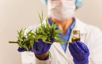 Endlich leichterer Zugang zu Cannabis als Schmerzmittel – auch ein Erfolg der SPO